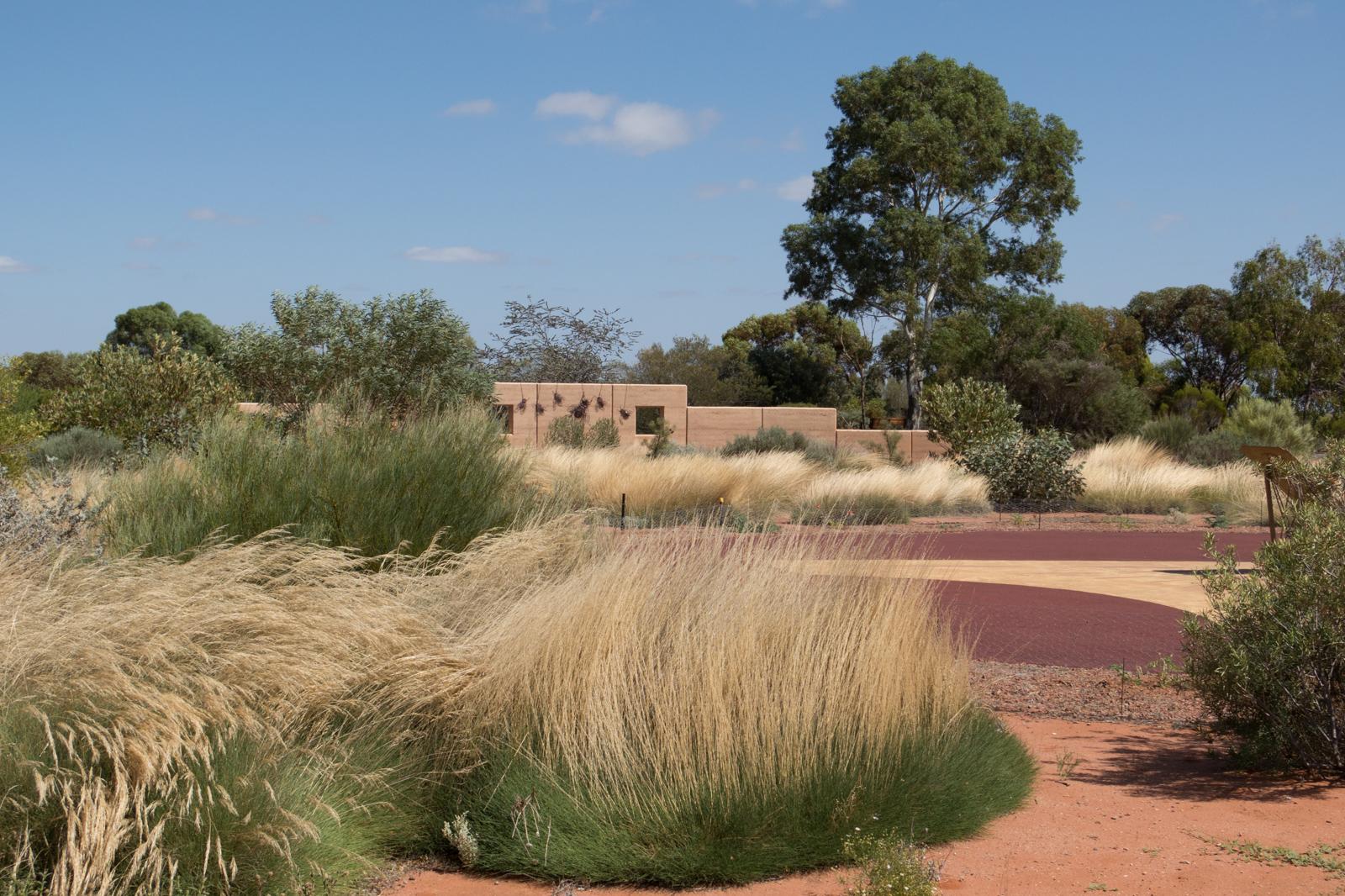 Day 36 - Australian Arid Lands Botanic Garden, Port Augusta · Daerr ...